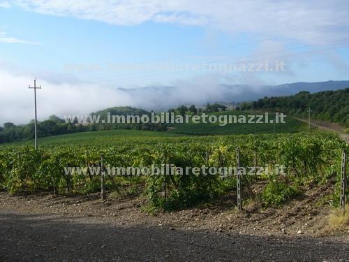 Azienda Agricola in vendita a Murlo, 10 locali, Prezzo trattabile | CambioCasa.it