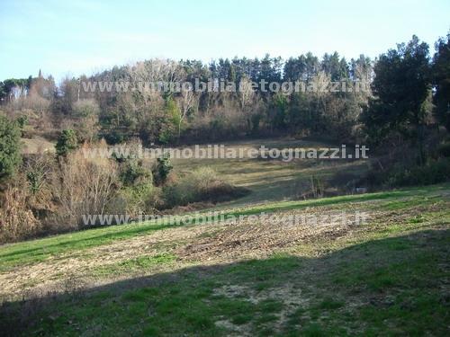 Terreno Agricolo in Vendita a Montaione