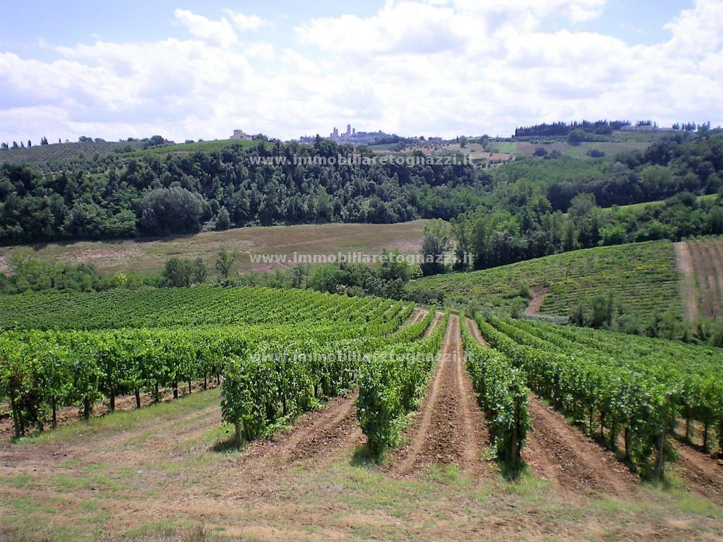 Vai alla scheda: Agriturismo Vendita - San Gimignano (SI) - Codice 30914
